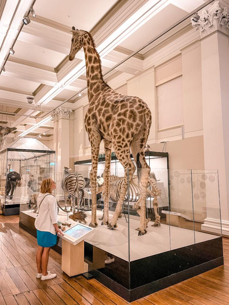 Free Australian Museum in Sydney
